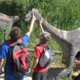 9/17 - Opole: co słychać u dinozaurów?