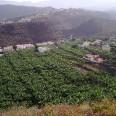 Moja podróż po trzech wyspach z archipelagu była bardzo urozmaicona: przemierzałem góry, miasta, puszczę, widziałem muzea, stanowiska archeologiczne, obserwatorium. Na zdjęciu plantacja bananów na przedmieściach Santa Cruz de La Palma.