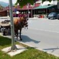 2/18 - EVS Macedonia: gdzie rośnie kiwi?