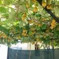 14/18 - EVS Macedonia: gdzie rośnie kiwi?