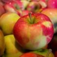 1/1 - Zabrze: bezpłatne owoce