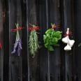 1/1 - Myszków: ziołowe sposoby na mięśniowo-kostne choroby