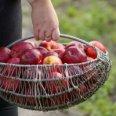 1/1 - Gniezno: Dieta Alleluja - odżywiaj się zdrowo